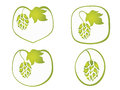 Hops plant stylized set on white background Stock Images