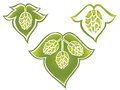 Hops plant stylized set on white background Royalty Free Stock Photography
