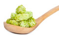 Hops in a wooden spoon Royalty Free Stock Image