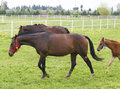 Horde Royalty Free Stock Photo