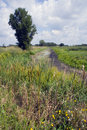 Horicon Marsh landscape Royalty Free Stock Photo