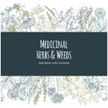 Horizontal banner with color medicinal flowers and herbs on white background