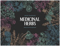 Horizontal dark card template with vintage sketches of medicinal herbs and flowe