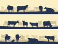 Horizontal illustration of farm pets vector banner silhouettes grazing animals cows and bulls Royalty Free Stock Photography