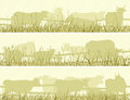 Horizontal illustration of grazing farm pets.