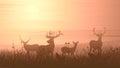 Horizontal illustration of wild animals on meadow. Royalty Free Stock Photo