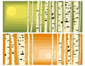 Horizontal illustrations of trunks birches. Stock Photography