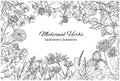 Horizontal monochrome banner with medicinal flowers and herbs on white