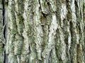 horizontal natural background - bark of oak tree Royalty Free Stock Photo