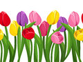 Horizontal seamless background with colored tulips of various colors and green leaves Royalty Free Stock Images