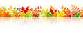 Horizontal seamless background with colorful autumn leaves. Vector eps-10.