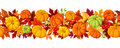 Horizontal seamless background with colorful pumpkins and autumn leaves. Vector illustration. Royalty Free Stock Photo