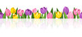 Horizontal seamless background with colorful tulips. Royalty Free Stock Photo