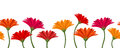 Horizontal seamless background with gerbera vector red and orange flowers Stock Photos
