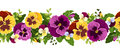 Horizontal seamless background with pansy flowers yellow and purple and green leaves Royalty Free Stock Image