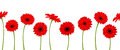 Horizontal seamless background with red gerbera flowers. Vector illustration. Royalty Free Stock Photo