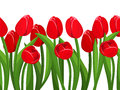Horizontal seamless background with red tulips. Vector illustration. Royalty Free Stock Photo