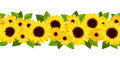 Horizontal seamless background with sunflowers and calendula flowers green leaves on white Stock Photo