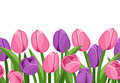 Horizontal seamless background with tulips pink and purple and green leaves on white Royalty Free Stock Photography