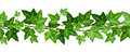 Horizontal seamless garland with ivy leaves. Vector illustration. Royalty Free Stock Photo