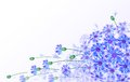Horizontal vector card with bluebottles greeting gentle bluebottle bouquet Royalty Free Stock Photo