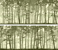 Horizontal wide banners of coniferous wood.