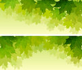 Horizontal wide banners of maple tree crown.