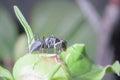 Hormiga de mirada feroz Fotos de archivo libres de regalías