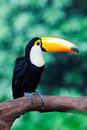 Hornbill stands on the trunk Royalty Free Stock Images