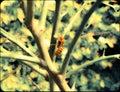 Hornet navigating its way through thorns Royalty Free Stock Photo