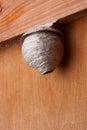 Hornet's nest Royalty Free Stock Photo