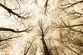 Horror forest with directly below persective a Royalty Free Stock Images