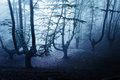 Horror forest at night nightmare and Stock Photography