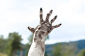 Horror and Halloween theme: Terrible zombie hands dirty with black nails reach for the sky, walking dead apocalypse, first-person Royalty Free Stock Photo