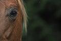 Hors eye Royalty Free Stock Photo