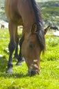 Image : Horse  horse mane