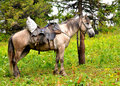 Horse at Altai mountains Stock Photos