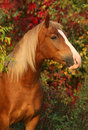 Horse on autumn background Royalty Free Stock Photos