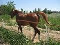Horse back Royalty Free Stock Photo