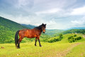 Horse on a background of mountain Stock Photos