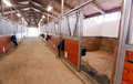 Horse barn animal sport paddock equestrian ranch racing stable the center path through a light at the end of the tunnel Stock Images