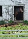 Horse In A Barn