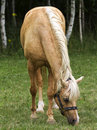 Horse beautiful brown pasturing in a rural landscape Stock Image