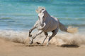 Photo : Horse  elf