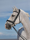 Horse in bridle headshot a head shot of a beautiful grey Stock Photo