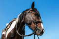 Horse bridle portrait of a brown with closeup against a blue sky Stock Photos