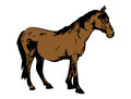 Horse brown black illustration of a Stock Image
