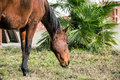 Horse a brown on a ranch in italy Royalty Free Stock Photos
