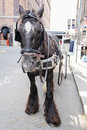 Horse With Carriage On A Stree...