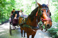 Horse carriage tour outdoors in park Royalty Free Stock Photography
